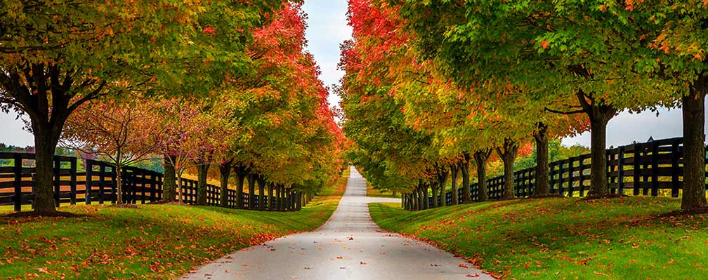 Woodford County Kentucky Road.